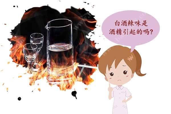 白酒辣味是酒精引起的吗