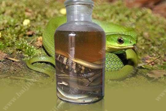 用蛇泡制的酒究竟会不会有毒呢?
