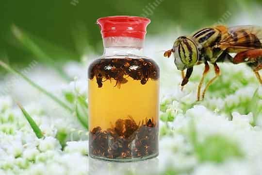 虎头蜂酒有哪些功效与作用?