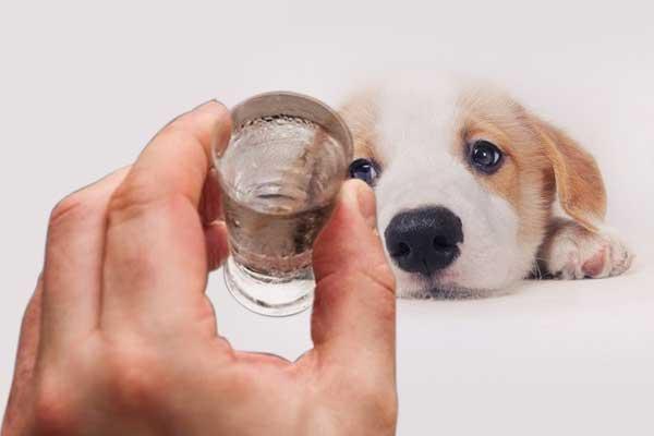 狗狗为什么不能喝酒