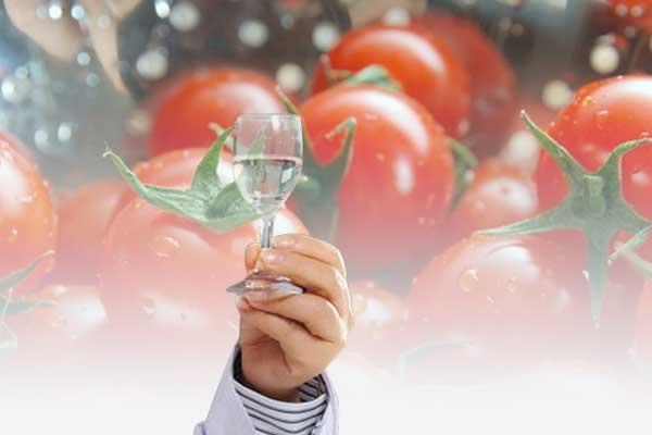 喝白酒时可不可以吃番茄