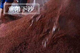 酱香型白酒酿制工艺中的下沙环节,为什么要选在重阳下沙