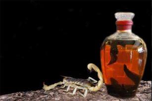蝎子酒是怎么泡制的?蝎子酒有哪些功效与作用?