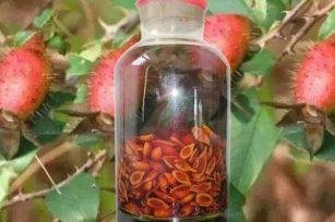 关于金樱子泡酒的功效,你了解多少?