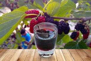 关于桑葚酒的功效,你了解多少?