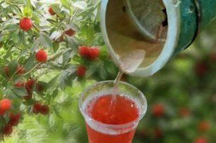 竹酒为什么是红色的?竹子里红色的酒是怎么回事呢?