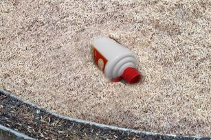 深入为大家分享下酱香酒中为什么要加稻谷壳?